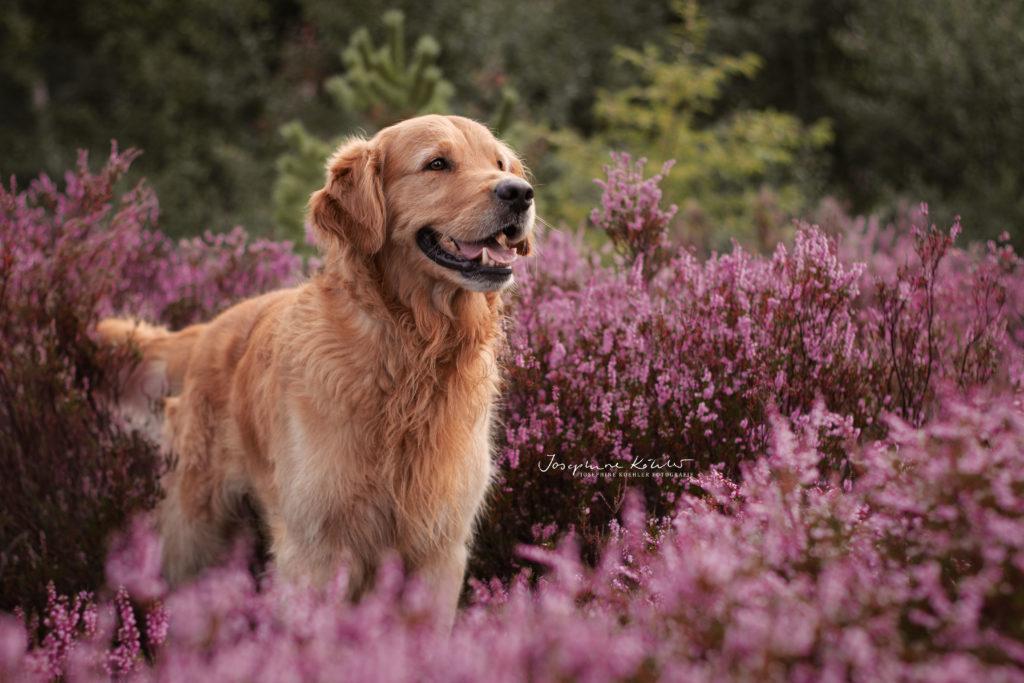 Hundefotografie Theo Heide