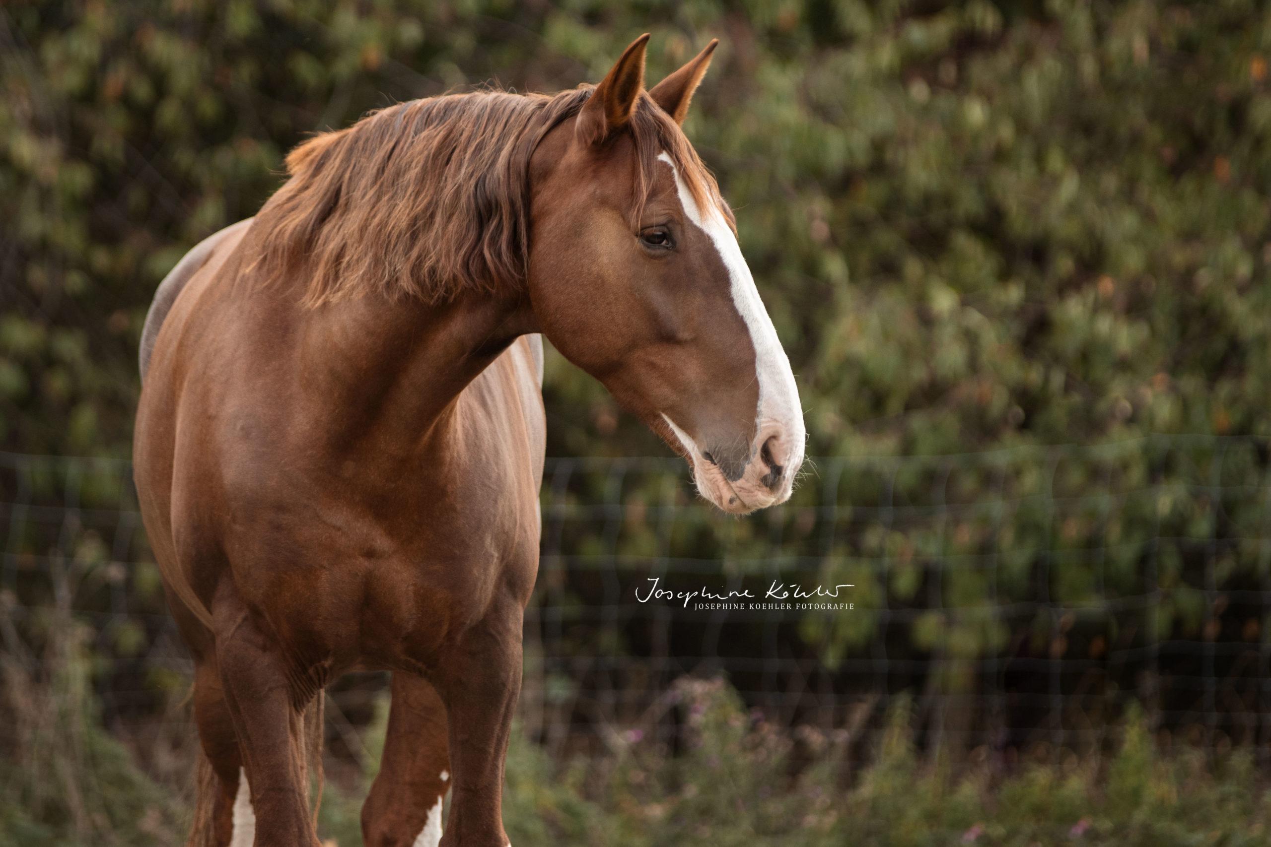 Pferdefotografie Josephine Köhler