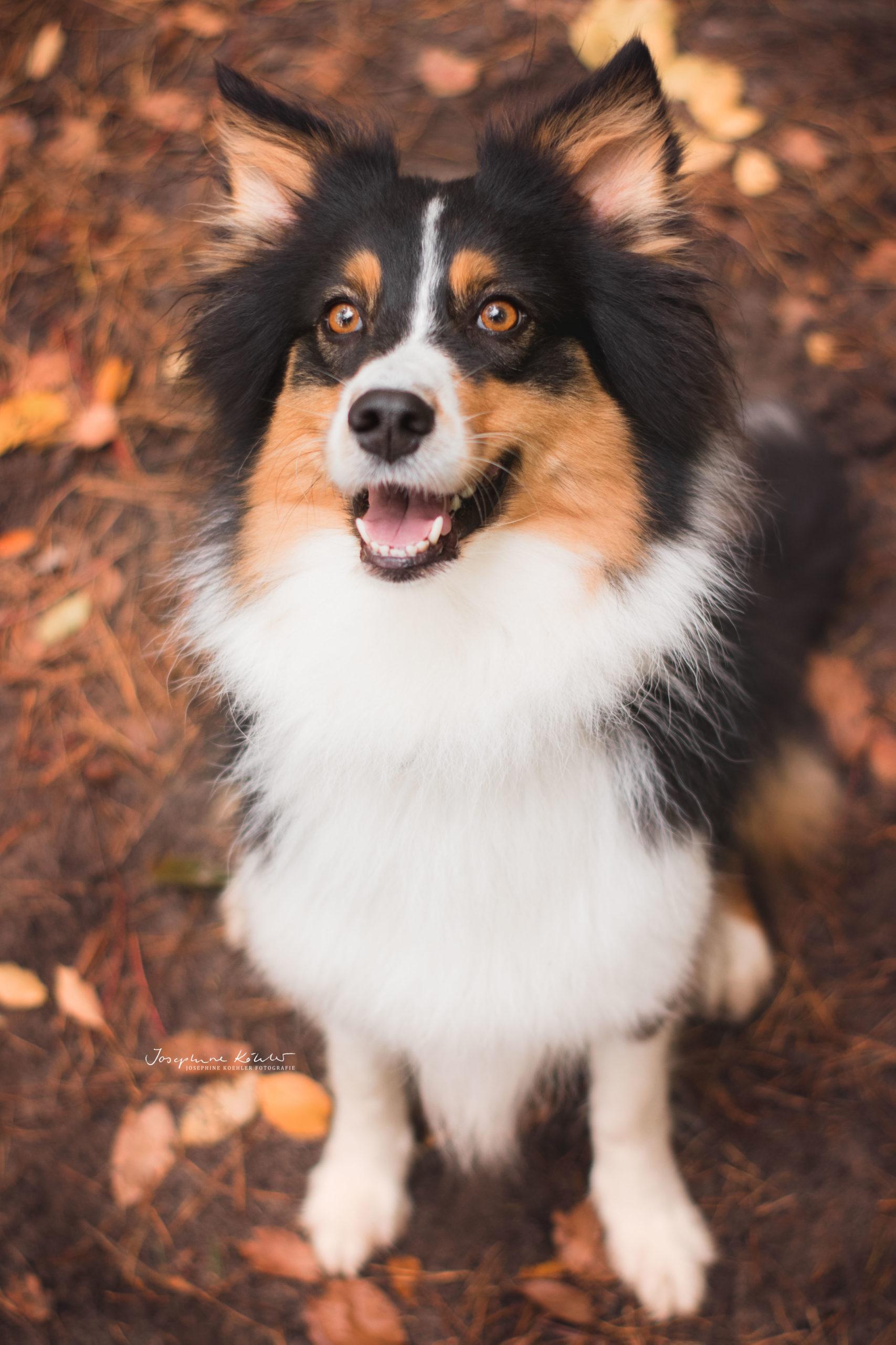 Hundefotografie Bernau