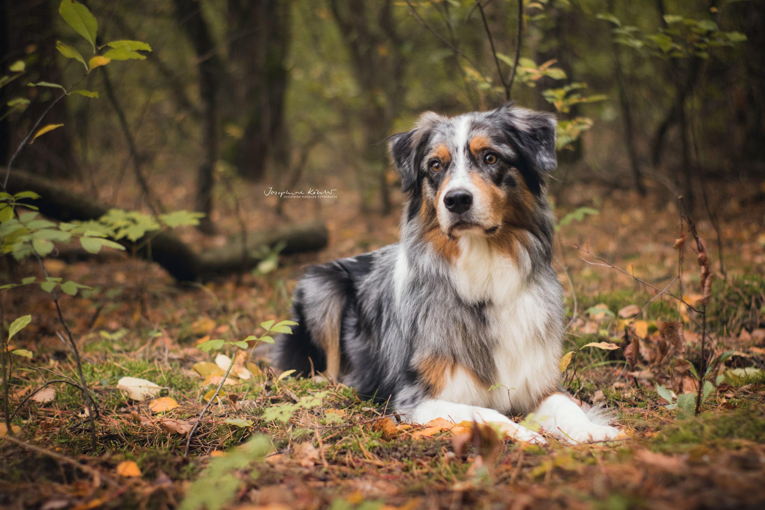 Hundefotografie Eberswalde