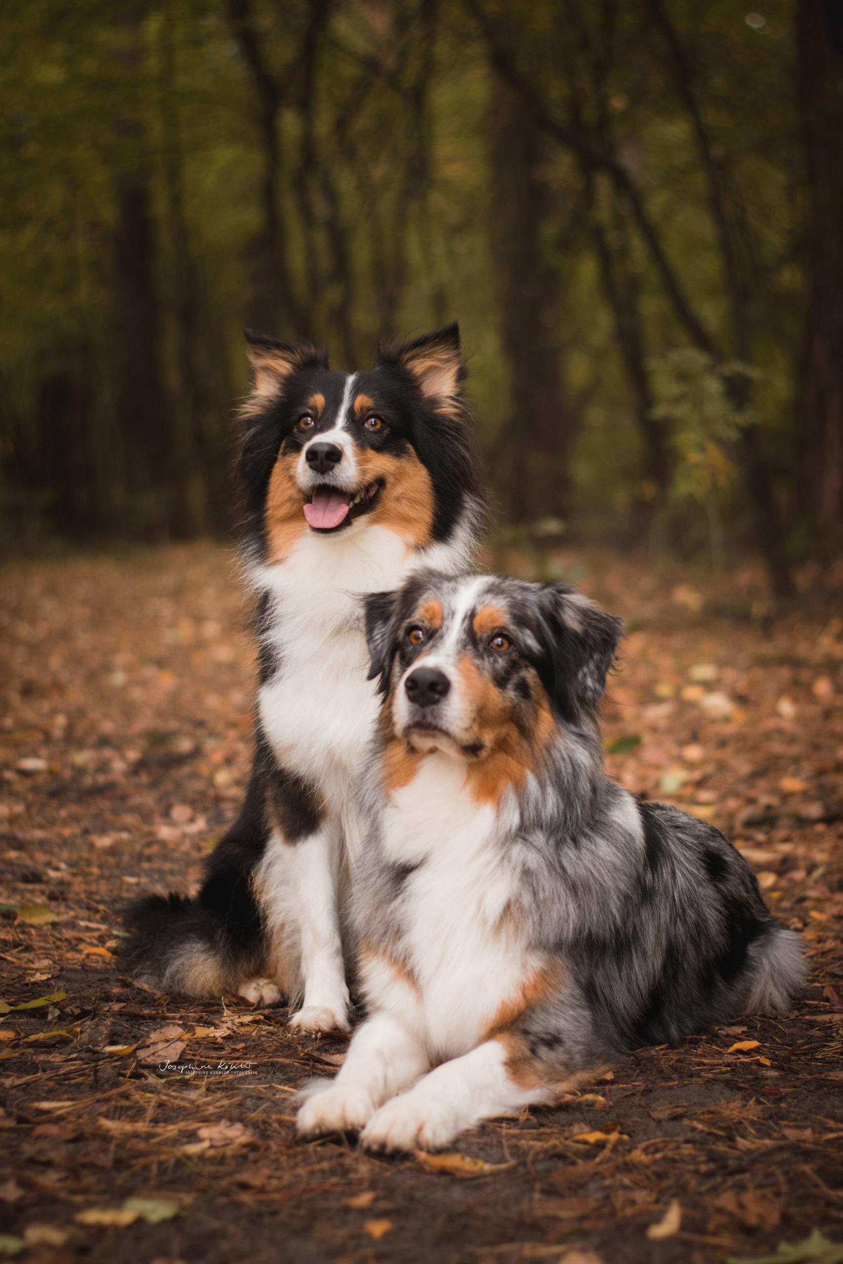 Fotoshooting Hund Brandenburg Bernau