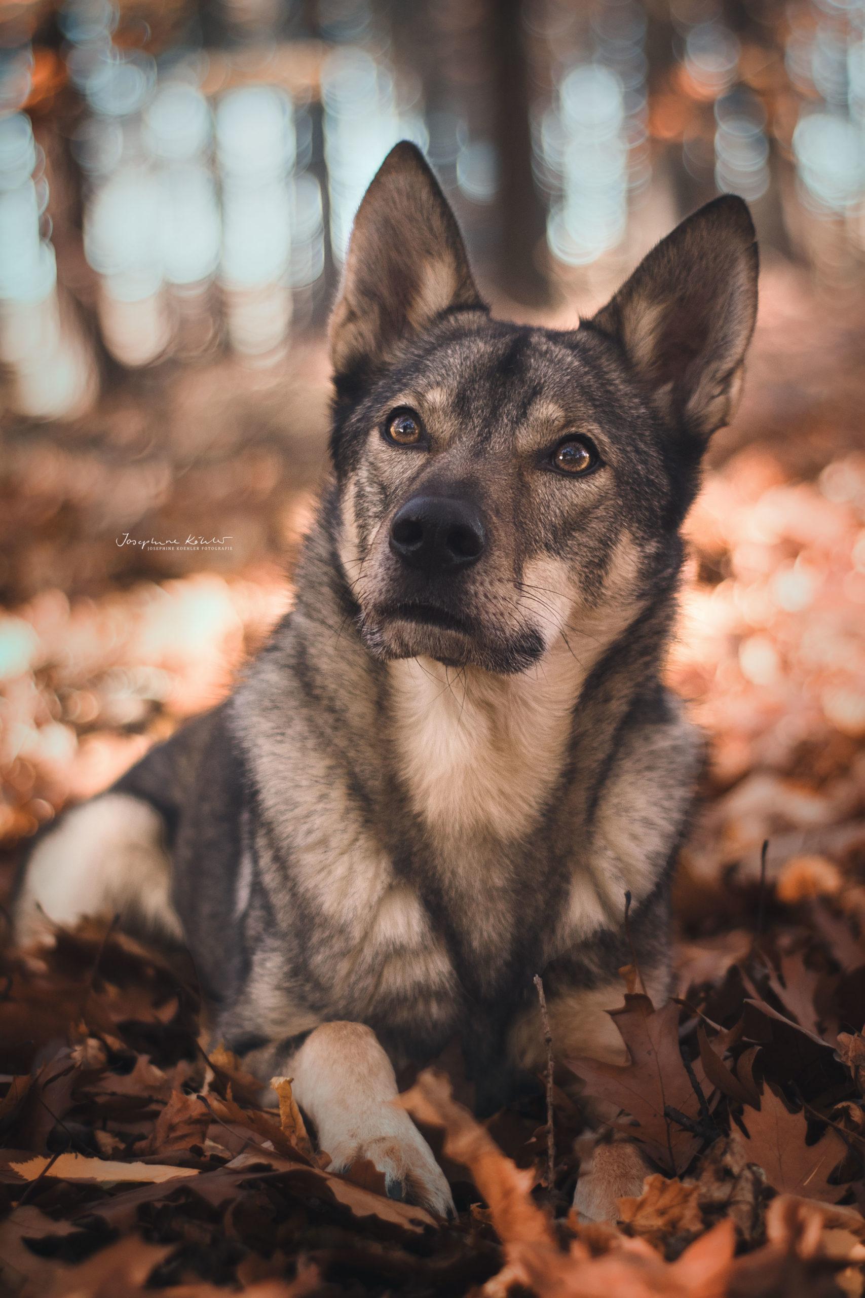 Hundefotografie Herbst Hunde Bilder