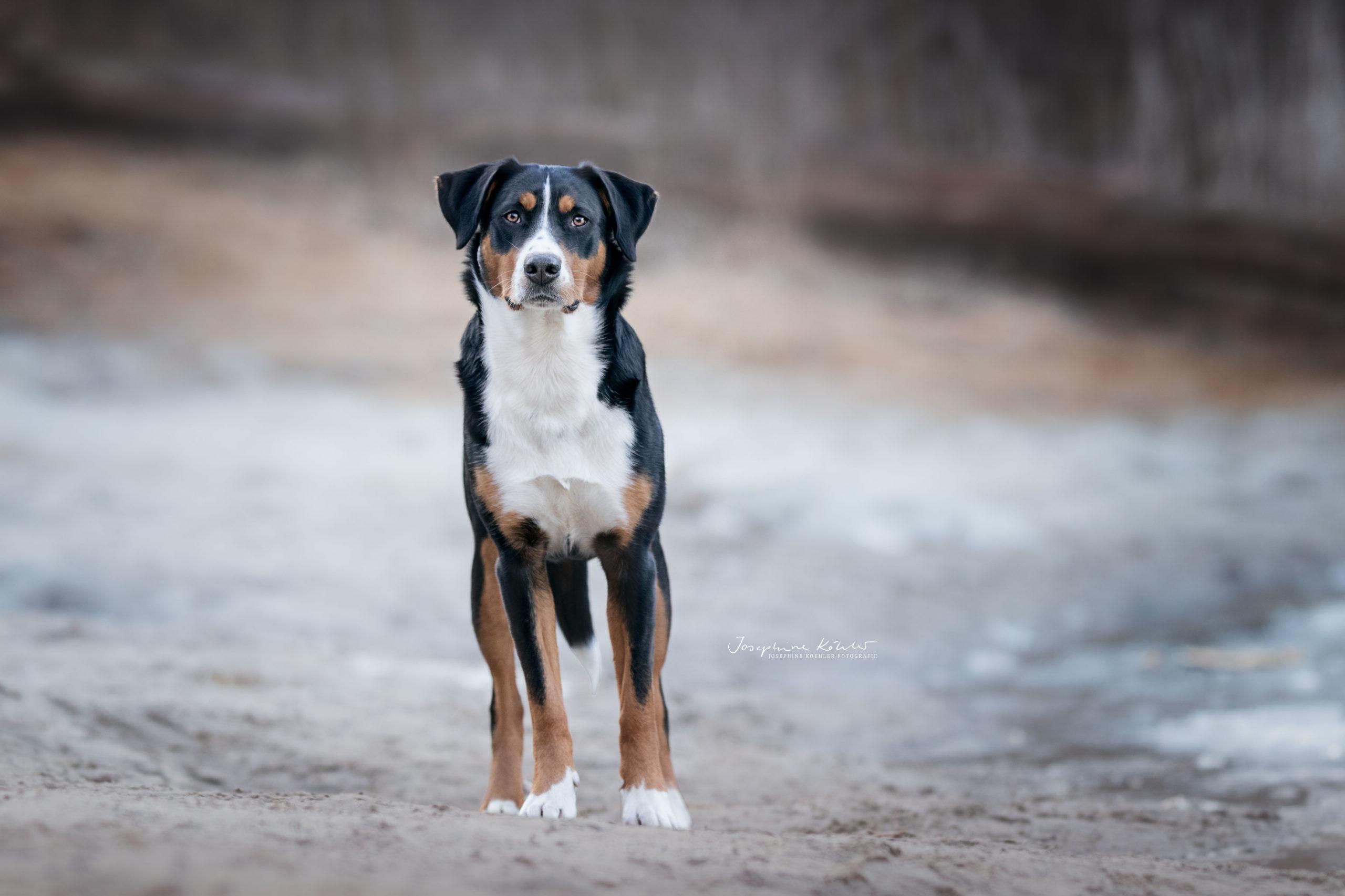 Bilder von Hunden